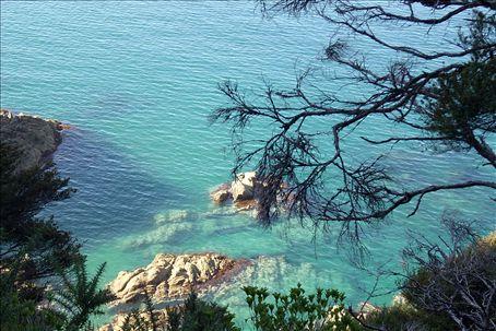 blue tasman sea water!