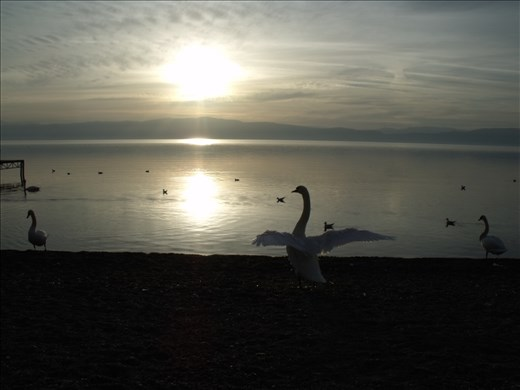 A bird freely flapping its wings on the shores is a gesture only the lake can translate.