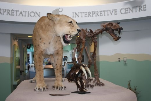 Sabre toothed tigers, also called scimitar cats.
