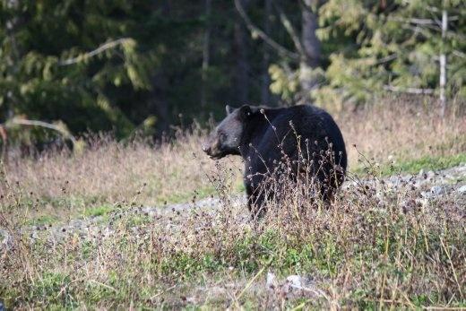 A black bear. He lives near the sliding centre.