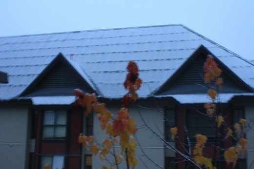 Snow from the first snowfall of the year to reach House! On the morning after Halloween too. Too cool.