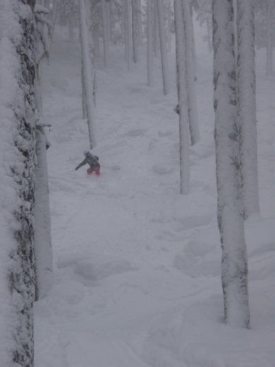 Bron, carving through some trees in heavy snow