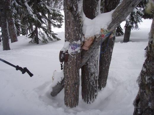Whistler trees - enter at your own risk