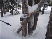 Whistler trees - enter at your own risk: by elis82, Views[314]
