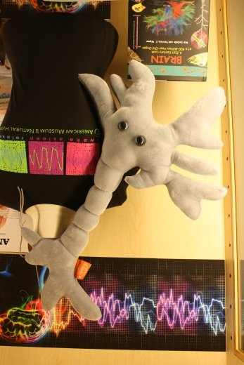 A plush neuron toy from the American Museum of Natural History