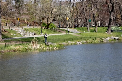 Guy fishing in a lake in Central Park. Not sure you'd want to eat anything you caught