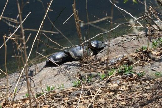 Tortoise stack!
