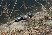 Tortoise stack!: by elis82, Views[212]