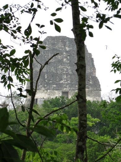 Tikal - the top of temple 5 sticking out the jungle