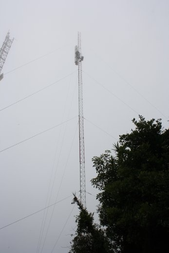 Working with heights in a cloud forest.