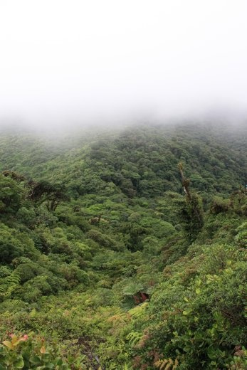 Cloud forest valley