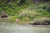 Flamingoes. Pink ones: by elis82, Views[69]