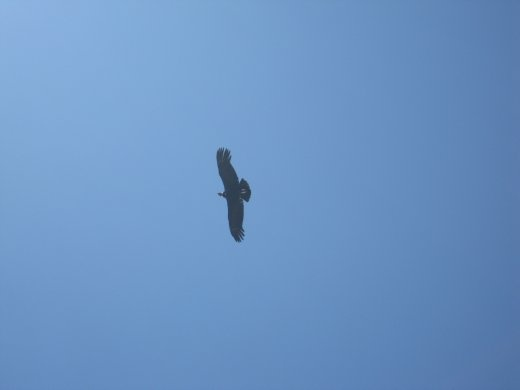 More Andean condors, at our first pass. We saw 9 or 10 of them throughout the trek. Amazing birds