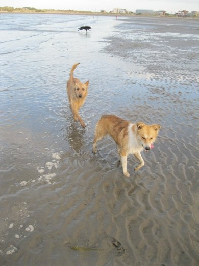 More of our faithful canines