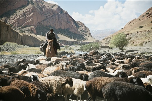 "The animals often don't belong to the shepherds who take care of them during the summer. Richer farmers pay them to go to the ""jailoos"" – the name for pastures in Kyrgyzstan. Every week, shepherds get down from the mountains to go sell the sheeps in animal markets that can be found all around the country."