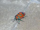a cool looking bug: by ellie, Views[312]