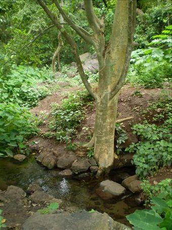 Arba minch (fourty springs - convergence) in Arba Minch, south Ethiopia