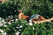 Dustin in the daisies : by elviajerotranquilo_1, Views[216]