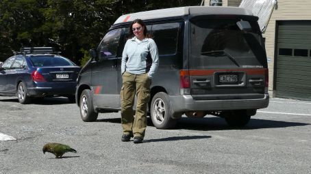 Em on Kea watch, they chew the rubber around your Windscreen or Wipers.