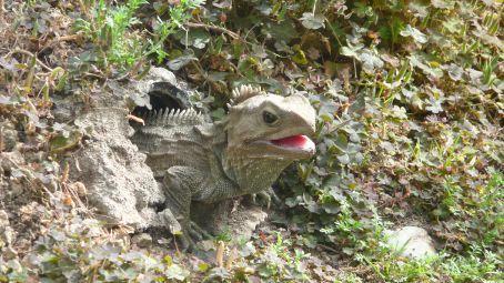 NZ rarest Reptile