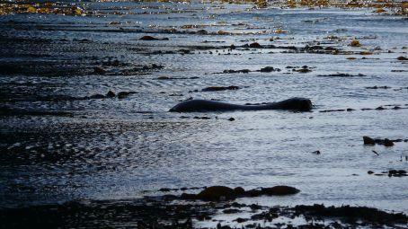 Spot the Fur Seal?