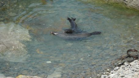 2 cubs playing in a rockpool
