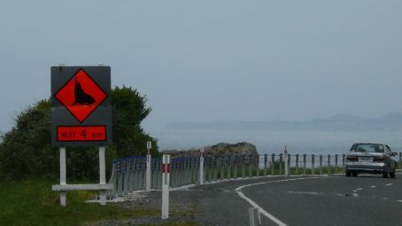 Watch the Seals sign, on the main North Highway 1
