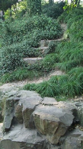 Humble Administrator's Garden - Little Path