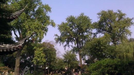 Lingering Garden - Tall Teak Trees