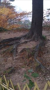 Dragon Claw tree: by emacinat, Views[159]