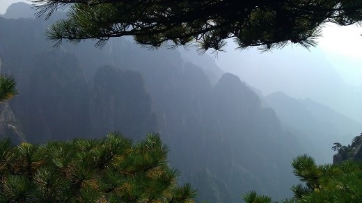 Trees framing the mountains