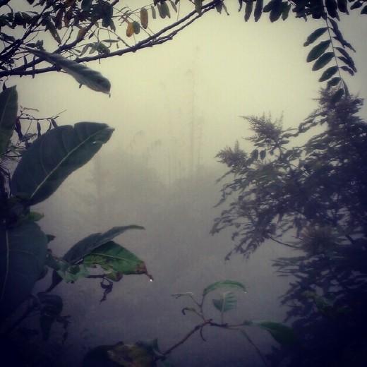 Foggy Valley at Baishan