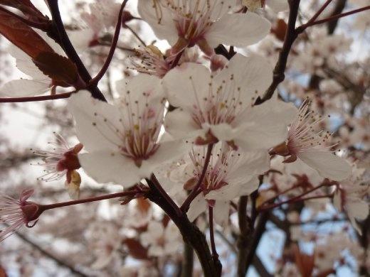 C'est le printemps ici! ah ben oui un autre été devent moi!