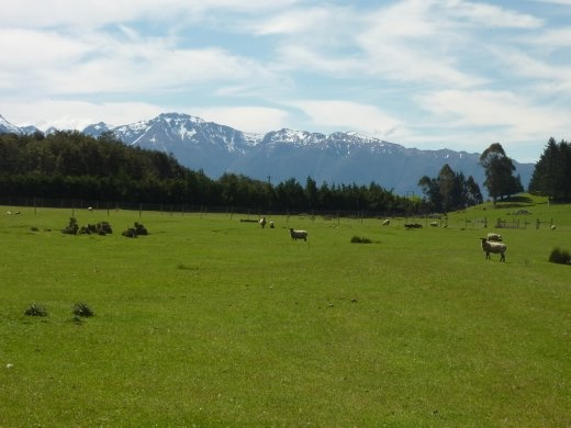 Je devais a tout prix prendre une photo des montagnes avec des moutons!!! Vue tres tres commune en NZ
