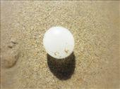 so quelqu'un sait ce que c'est dites-moi le..parce que je cherche encore....une boule blanche sur la beach...pas tout a fait dure mais pas molle...grosse comme mon pouce...: by emilpeace, Views[149]