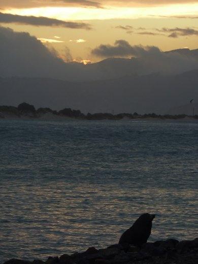 Peninsule D'otago---espoir de voir de petits penguins bleus...resultat final...pas de penguins mais un super beau coucher de soleil et des phoques