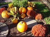 Fall garden on Comm. Ave: by emilymason, Views[154]