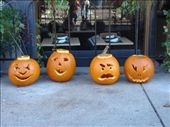 Pumpkins in the South End: by emilymason, Views[143]