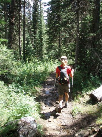 Hiking in the old growth forest in Yoho Nat. park