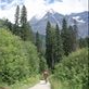 Fun single track up to Mt Robson, the biggest mountain in the Canadian Rockies Views[317]