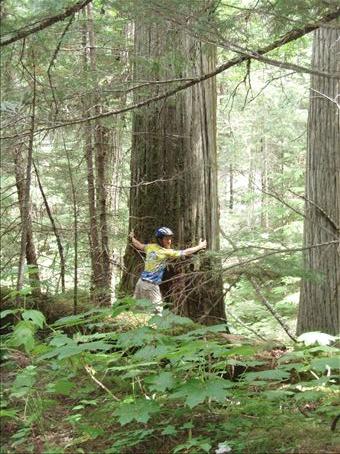 Scott, the tree hugger! An old growth Cedar.