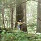 Scott, the tree hugger! An old growth Cedar. Views[322]