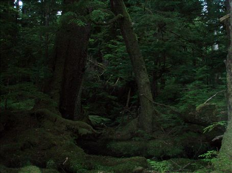 Beautiful, mystical old growth