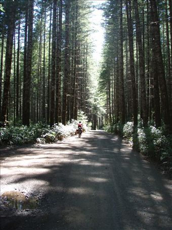 Biking through the logging roads on Vancouver Island