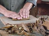 Hand rolling a Cuban cigar from the farm's prepared tobacco in Vinales.: by emma_hopkirk, Views[163]