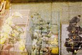These cages crammed with birds feels like Hong Kong to me - in its loud and beguiling mess.: by emmacapps, Views[141]