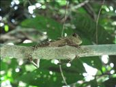 Lizard: by emmavh2010, Views[128]