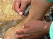 Clever little ones using stones for scrubbing the dirt off their feet.: by entertainers, Views[219]