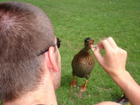 Making friends with the ducks.