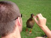 Making friends with the ducks.: by erin_and_pete, Views[222]